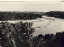 Panemunė pinewood forest, 4th decade of the 20th century. (Original is in KTU Library).